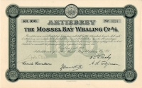 181_The-Mossel-Bay-Whaling-Co._1912_100_3524-